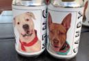 2 perros adoptados después de que la cervecería de Florida los presenta en latas de cerveza