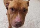 El Guardián del Perro del Condado de Mahoning emite PSA después de que se encontró un perro demacrado en Youngstown