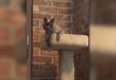 Mujer de Texas dice que un gato fue sacrificado accidentalmente durante una visita de rutina al veterinario