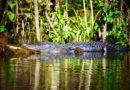 Un hombre viola la cuarentena por el coronavirus para ir de pesca y es devorado por un cocodrilo