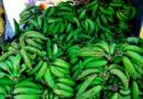 Dominicanos consumen más de ocho millones de plátanos diariamente »