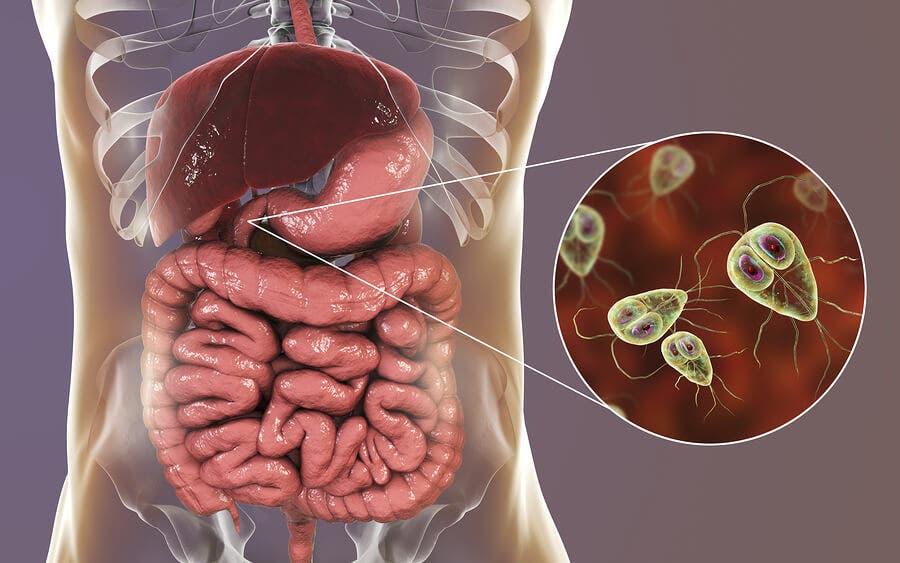 Giardiasis: síntomas y tratamiento - InfovisionRD.com -