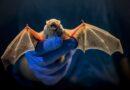 El biólogo que ayudó a rastrear el SARS hasta los murciélagos,