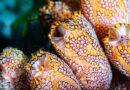 ATENCION:Qué es la plitidepsina, el prometedor antiviral español contra el COVID-19 proveniente del fondo del mar