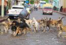 ATENCIÓN: Fundaciones que luchan incansablemente contra el maltrato animal