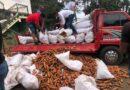 Crisis de la zanahoria: Productores advierten que autoridades no cumplen