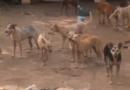 Residentes en sector de Bella Vista denuncian mal estado de perros en refugio de protección animal